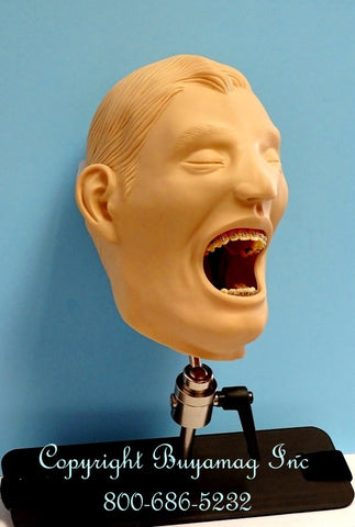 Orthodontic Models Manikin