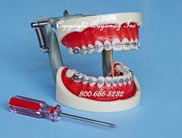 Orthodontic Simulator Ligature Tying Model