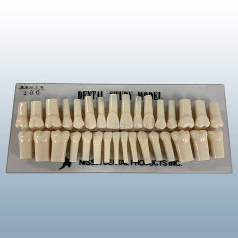 dental training teeth replacement