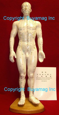 Acupuncture Models With Points  and  Meridians
