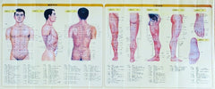 Acupuncture Chart Poster Points Meridias