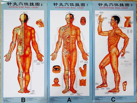 Acupuncture Charts - Posters and  Acupuncture Points & Meridians  Charts A B C