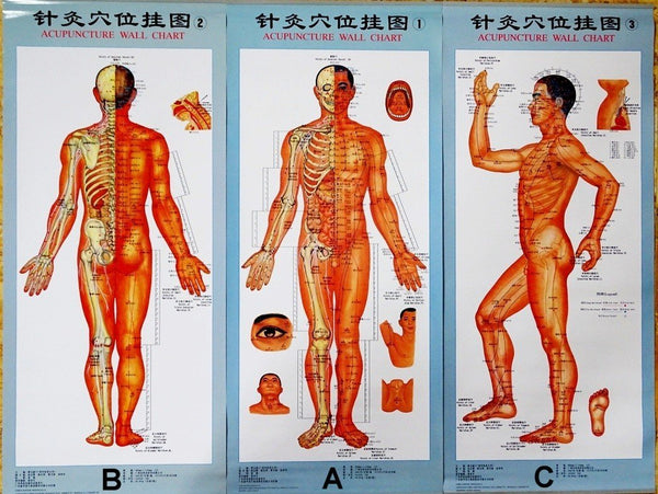 acupuncture points poster chart