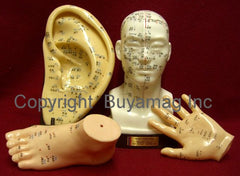 acupuncture ear head hand foot models