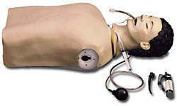 Airway Adult Management Trainer Manikin