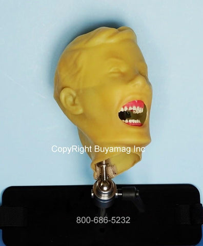 Child Dental Teeth Extraction Training Simulator/Manikin Pedodontic Complete & Mount