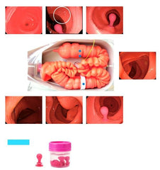 Replacement Semi-Difficult Intestine