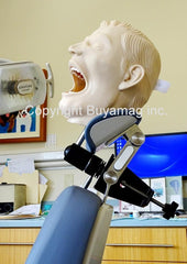 Child Dental X-Ray Radiopaque Training Simulator Manikin Complete