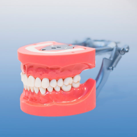 dental model DP articulator