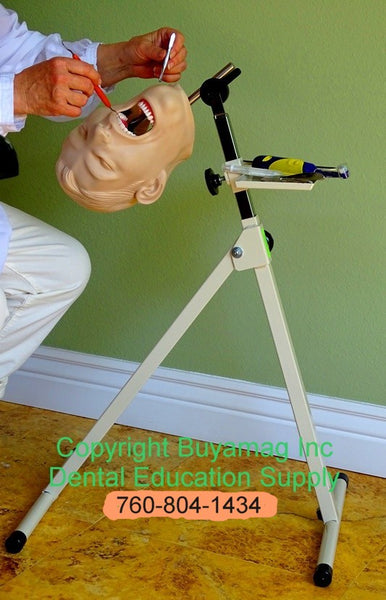 Dental Periodontal Hygiene Techniques Practice Training Simulator Manikin Complete With Mount of Your Choice