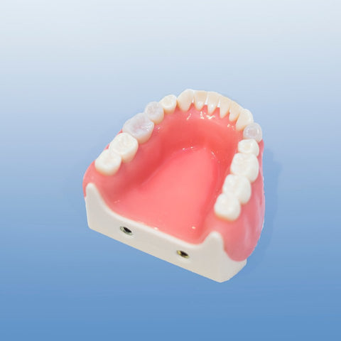 dental surgical gum suture model