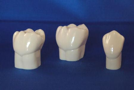 Teeth Natural Size 28 Set Teeth Resin