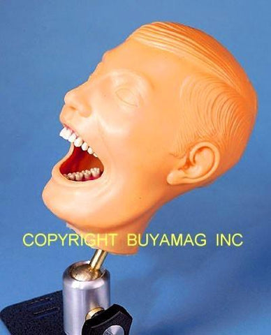 Dental Techniques Auxiliary Training Manikin Adult Complete