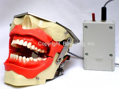 dental anesthesia injection model