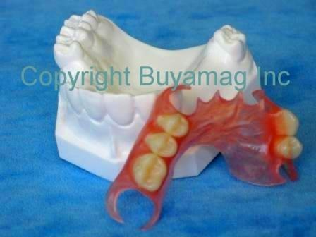 Dental Flexible Partial Model