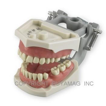 Dental Examination Models: Florida, North Eastern Or Western Board