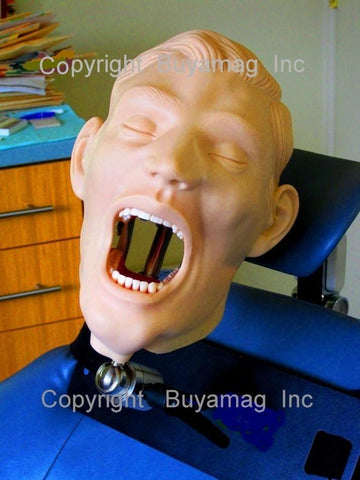 Adult Dental Tooth Extraction Training Simulator/Manikin Complete & Chair Mount