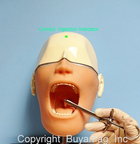dental anesthesia manikin simulator