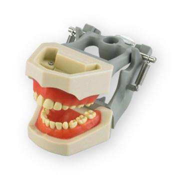 Orthodontic Models Pediatric Dentoform 24 Teeth