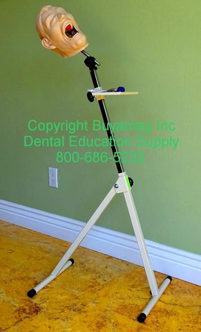 Dental Portable Stand / Mount For Head Posture & Techniques Training Demonstrations