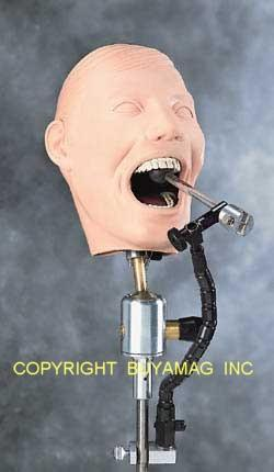 Dental X-Ray Training Manikin Complete Adult Complete
