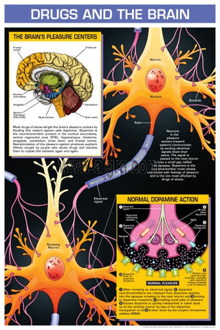 Drugs And The Brain Poster Chart
