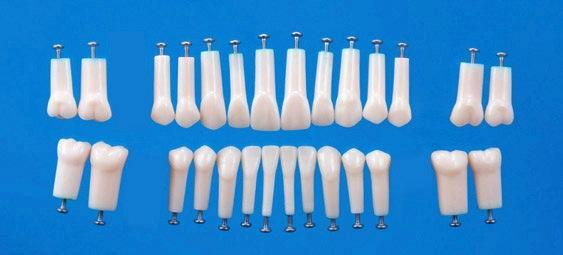 Preparation Replacement Teeth Straight Roots With Screws 32 or 28 Set