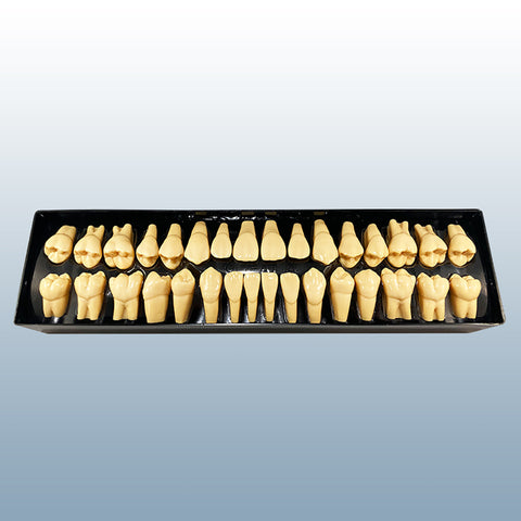 teeth anatomically shaped crowns set 32