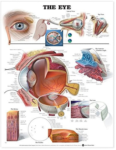 the eye poster education