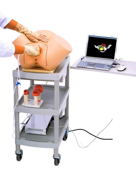 Childbirth Obstetric Gynecological Vaginal Reality Examination Training Simulator Universal
