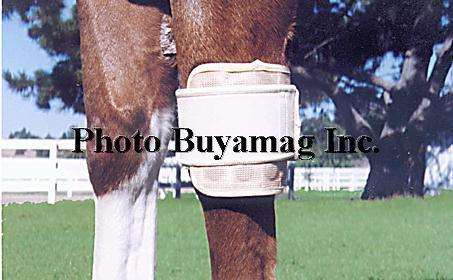 Flexible Magnetic Wraps For Horses