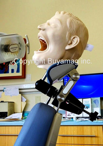 Adult Dental Tooth Extraction Training Simulator/Manikin Complete & Mount Of Your Choice