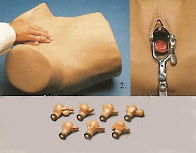 gynecologycal examination model pelvic manikin simulator