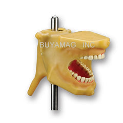 Oral Cavity Cover drainage system