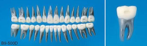 orthodontic metal alloy teeth