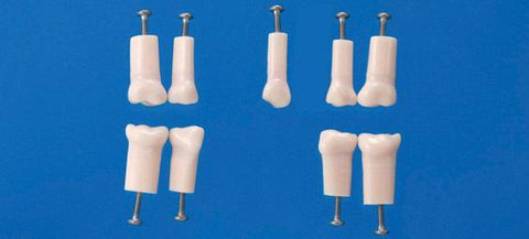 Pediatric Teeth With Deltal Pulp For Endodontic Practicing