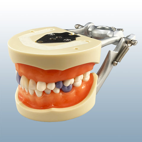 periodontal hygiene calibraion assisting model