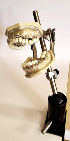 periodontal practice manikin model