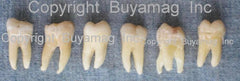 realhuman teeth sale