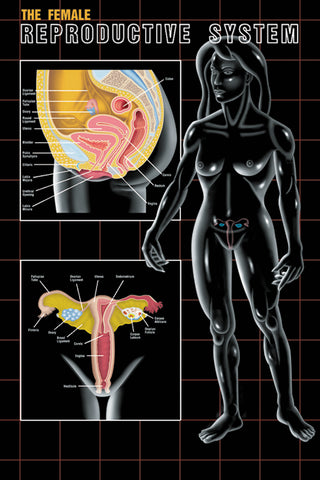 Female Reproductive System Poster Chart