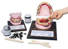 Smokeless Tobacco User Dental Model Educational Simulator
