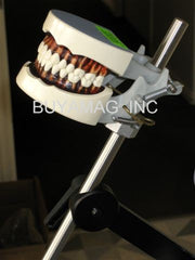 Dental Hygiene Training Typodont & Articulator 32 Teeth Model