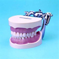 Dental Training  Simulator Manikin Magnetic System Water Drainage