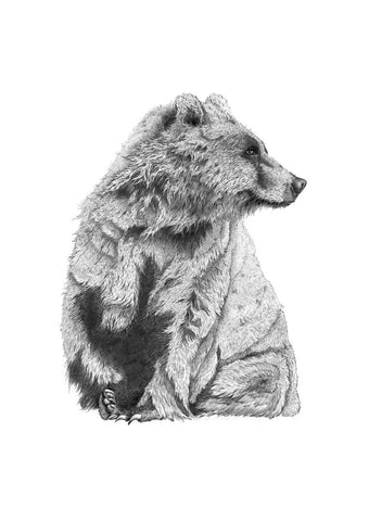 Big Wet Bear print by Ben Rothery A4/A3