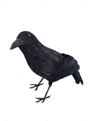 Realistic Crow