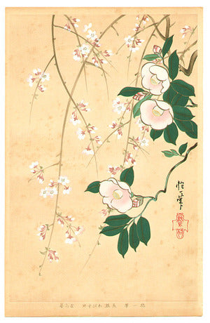 Camellia and Cherry - Rimpa School Series. Sakai Hoitsu Original painting in Edo period. This woodblock print series was made in 1931.