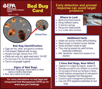 Bedbug Tip Card for Offices