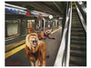 THE SUBWAY LIONS. - scottbenites