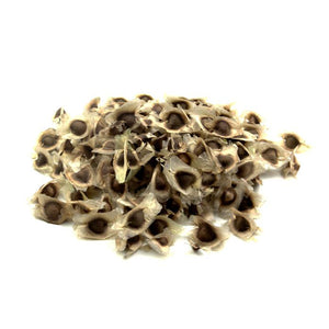 Moringa Seeds - NY Spice Shop