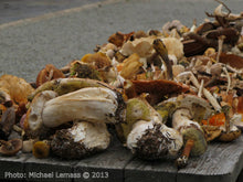 Load image into Gallery viewer, Mushroom Hunt at Killruddery House Sunday Oct 11th 2020
